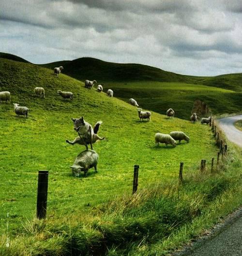 """""""Ετραππηούσεν τα πρόβατα πουτο βούρος"""""""